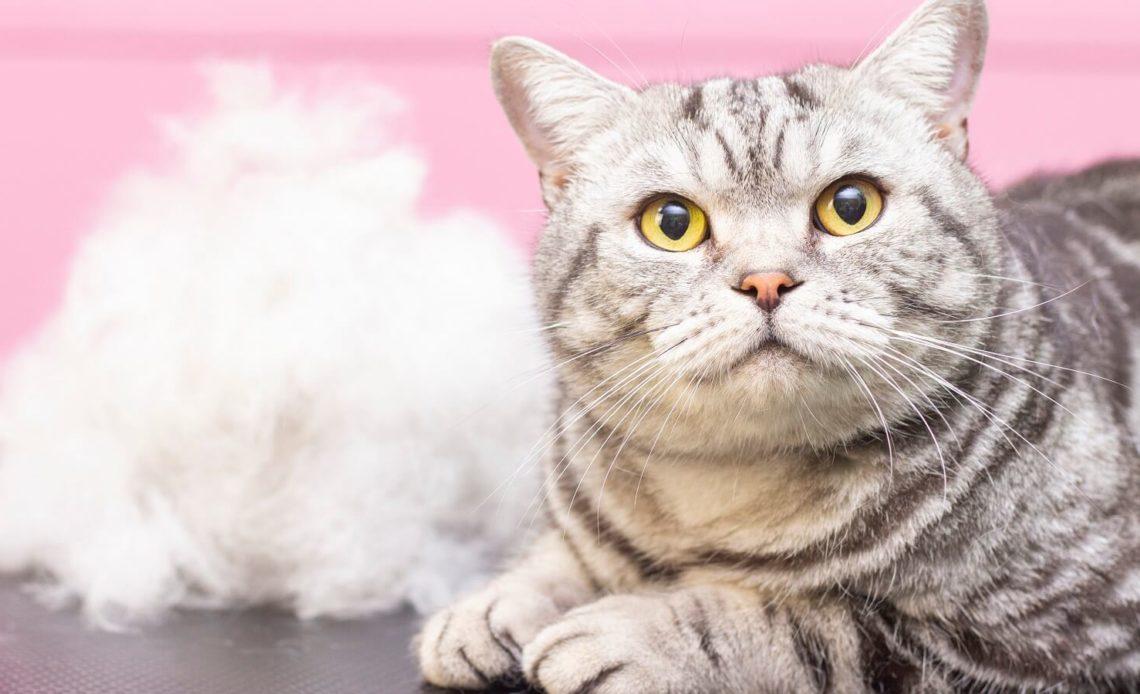 Почему кошки линяют?