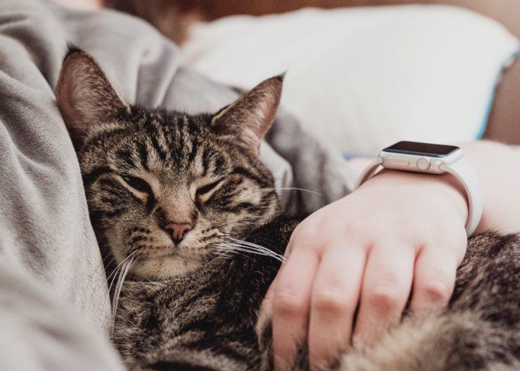 Топ 7 причин для любви к кошкам