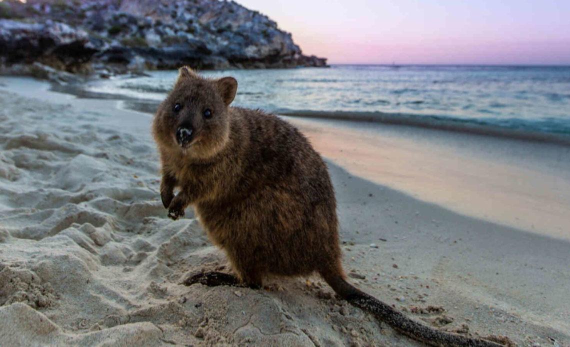 Самые безобидные животные в мире