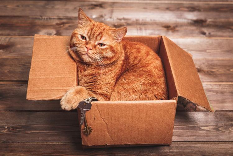 Почему говорят, что у кошки 9 жизней?
