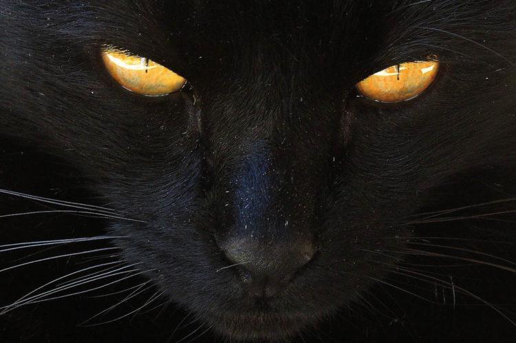Почему у кошки появилась перхоть?