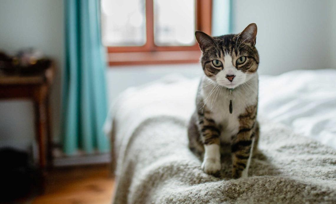 Почему кошки любят топтаться лапками на одном месте?