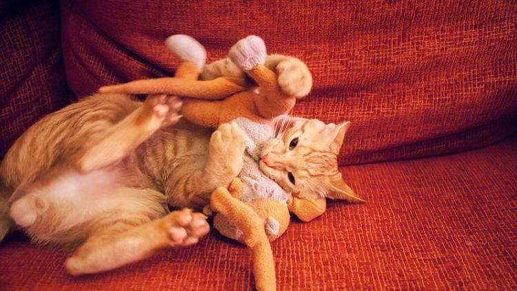 Некоторые кошки под воздействием корня валерианы могут стать агрессивными