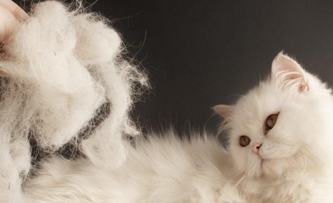 Почему кошка сильно линяет?