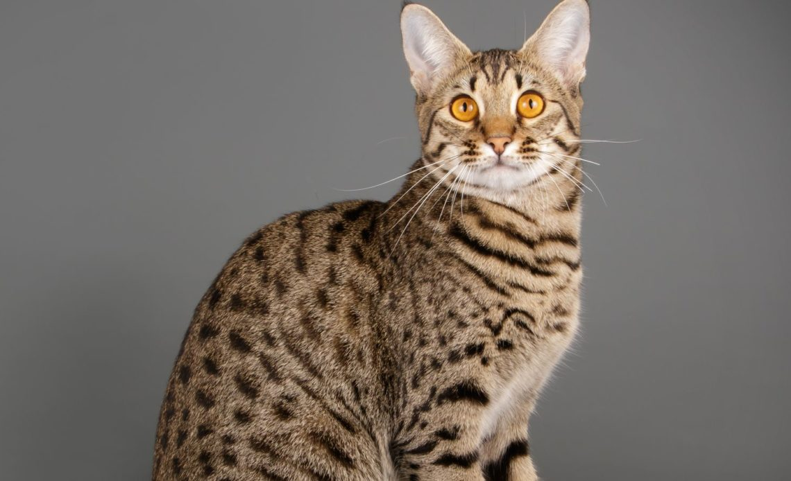 Почему кошки смотрят в пустоту?