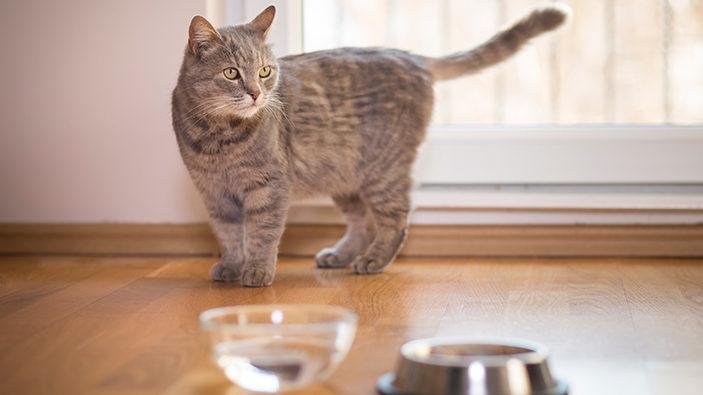 Почему кошка не пьет воду?