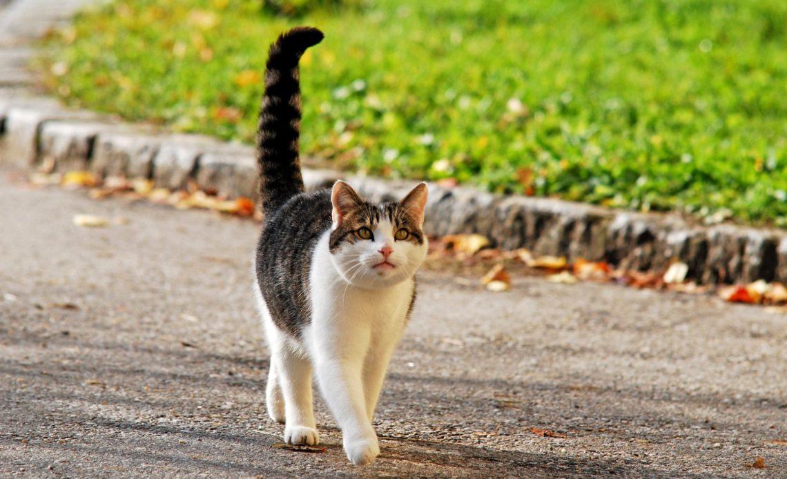 Почему кошка машет хвостом?