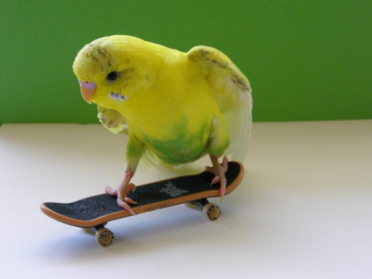 Трюки для попугаев