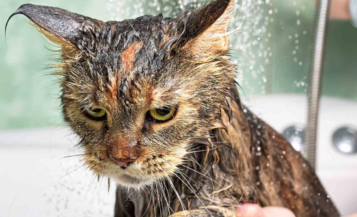 Почему коты не любят воду?