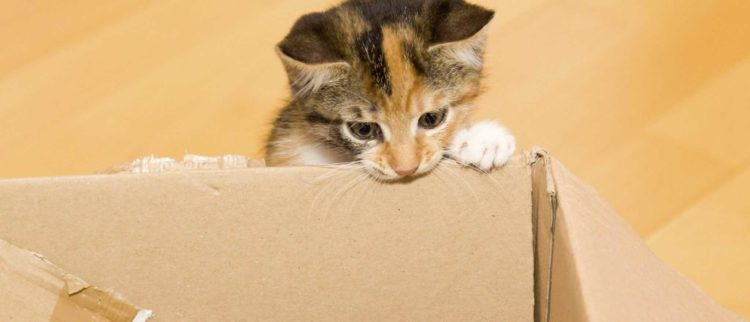 Почему кошка грызет картонную коробку?