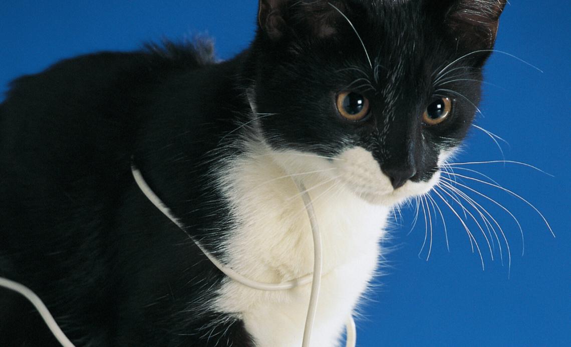 Почему кошка грызет провода?