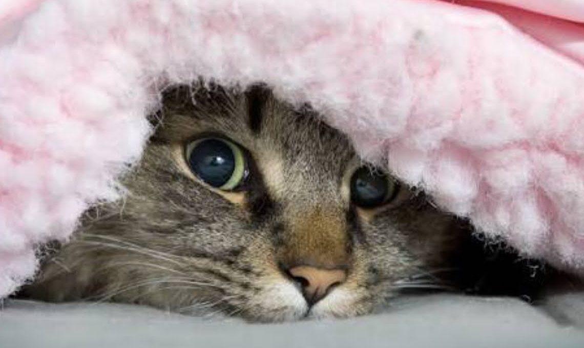 Почему кошка прячется под одеяло?