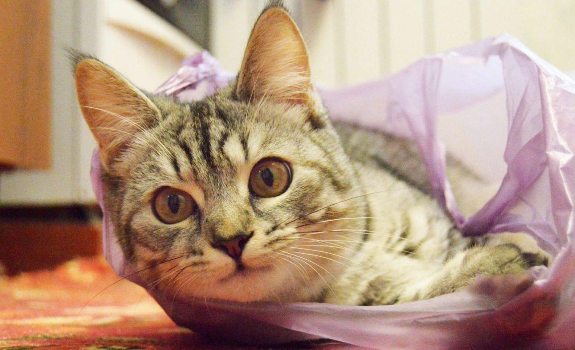 Почему кошки лижут пакеты?