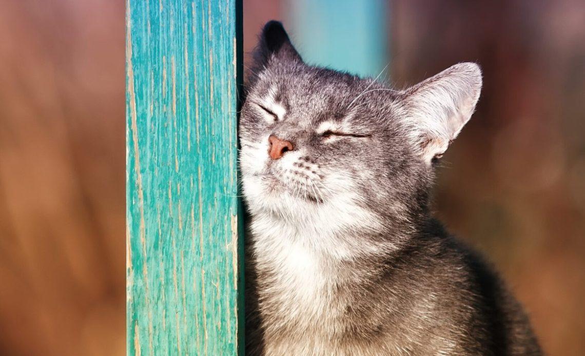 Почему кошки трутся мордой?
