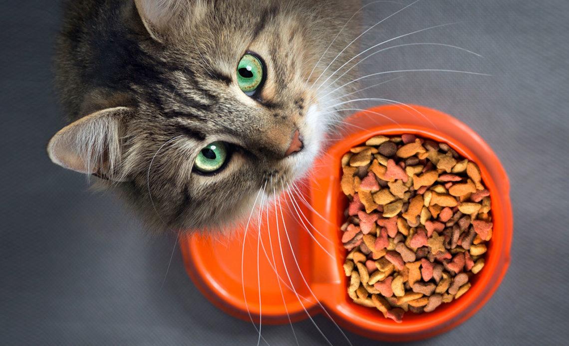 Почему кот не ест: что делать?