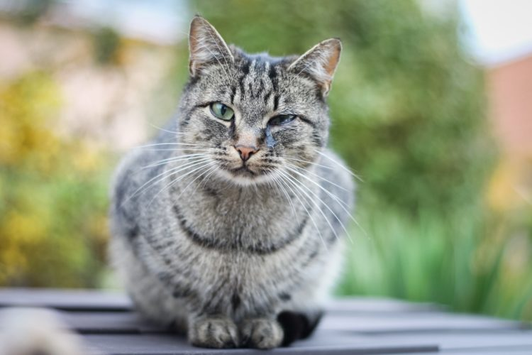 Кошки часто кашляют по причине респираторных заболеваний.