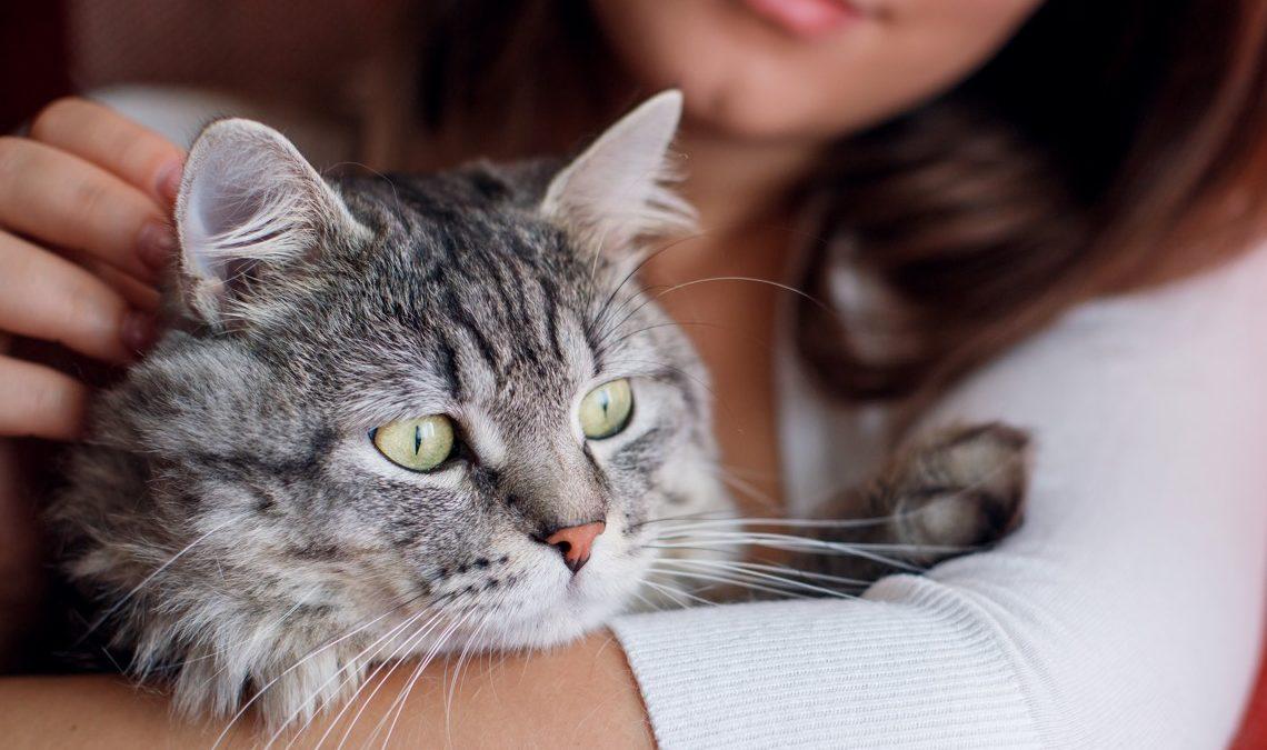 Почему кошкам одни люди нравятся, а другие – нет?