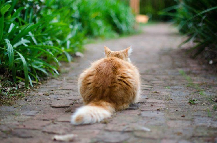 Почему кошки виляют хвостом?