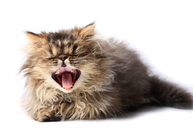 Почему кошка чихает?