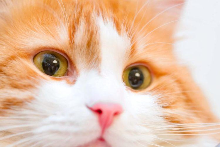Почему у кошки слезятся глаза?