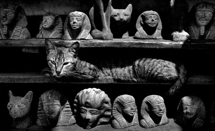 Почему египтяне поклонялись кошкам?