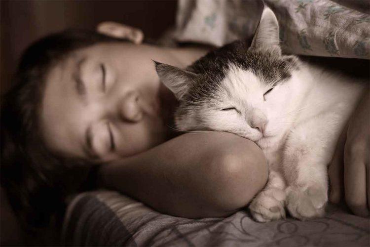Почему кошка спит на человеке?