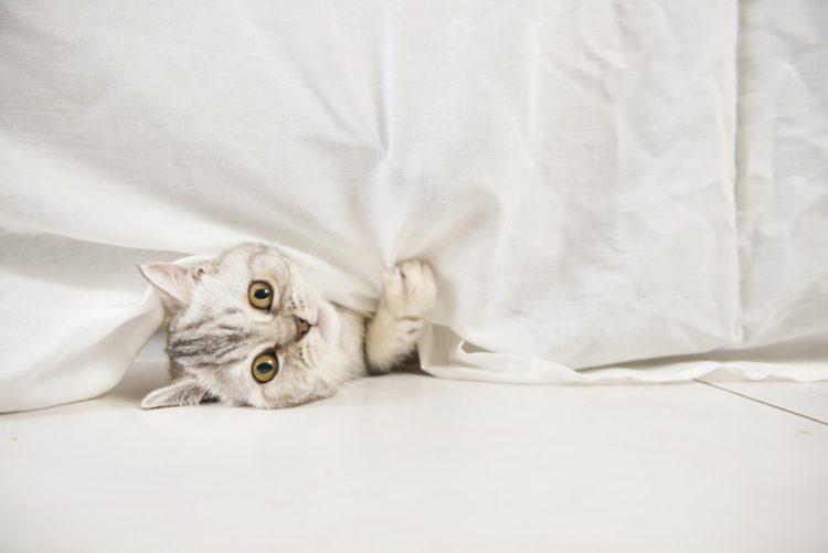 Задайте вопрос ветеринару: почему кошка гадит на кровать?