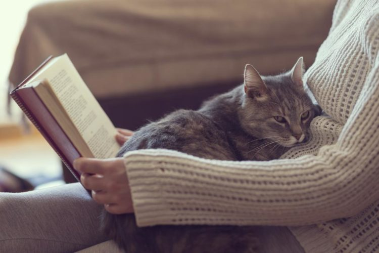 Почему кошкам нравится запах пота?