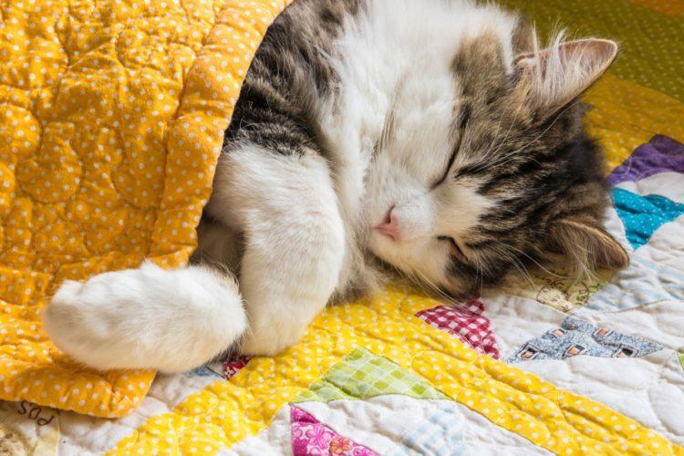 Почему кошки двигаются во сне?