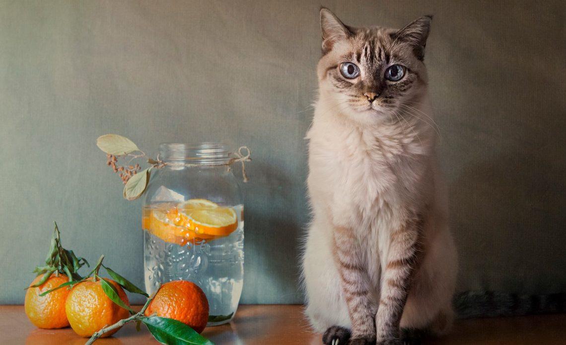 Почему кошки не любят цитрусовые?