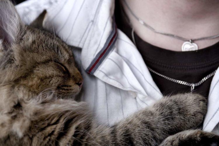 Почему кошка ложится на грудную клетку человека?