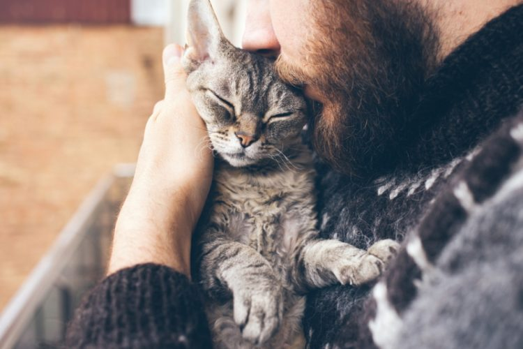 Почему кошки любят, когда их гладят?