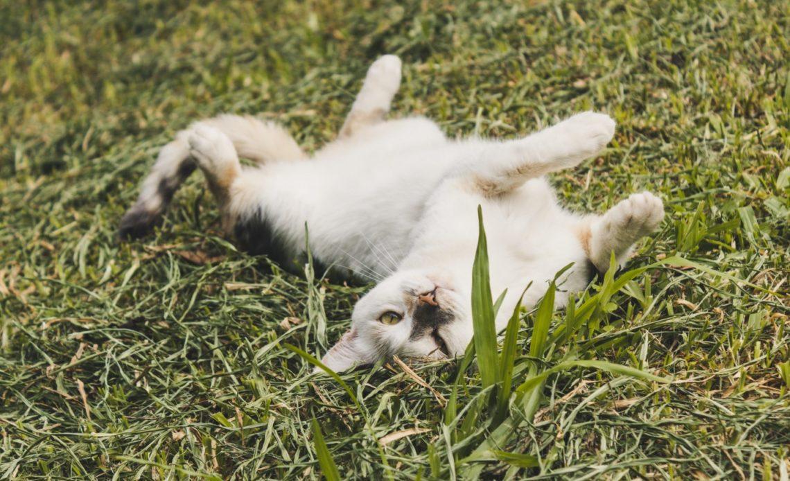 Почему кошки лежат на спине