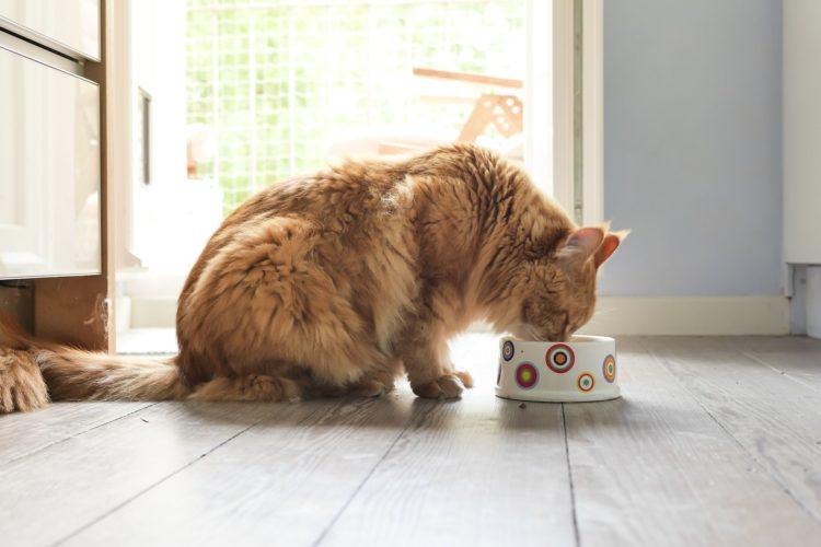 Вредный состав кошачьего корма