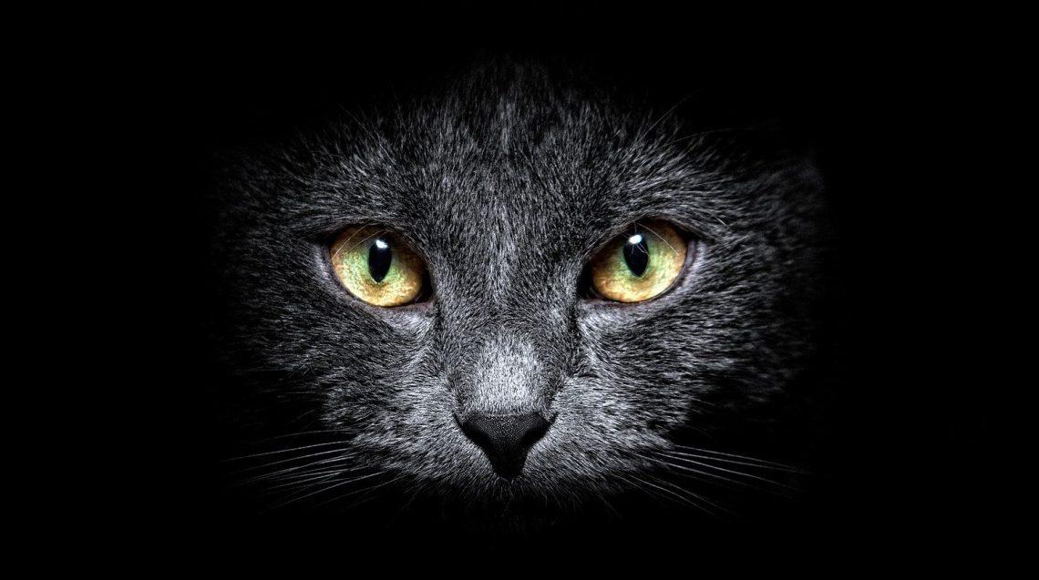 Могут ли кошки видеть в темноте?