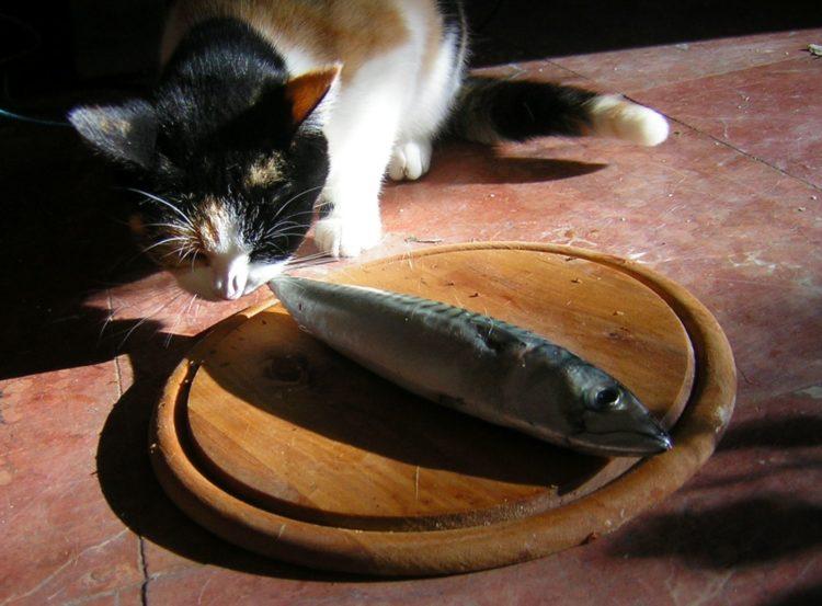 Употребление дикой рыбы