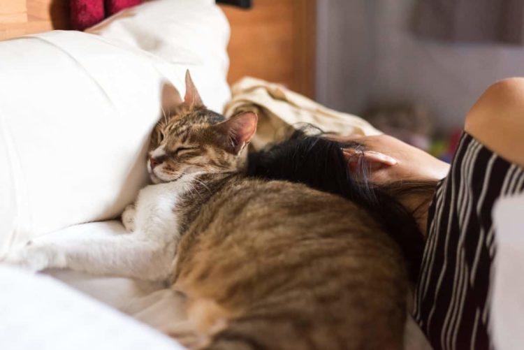 Что может быть приятнее сна на теплой голове хозяина