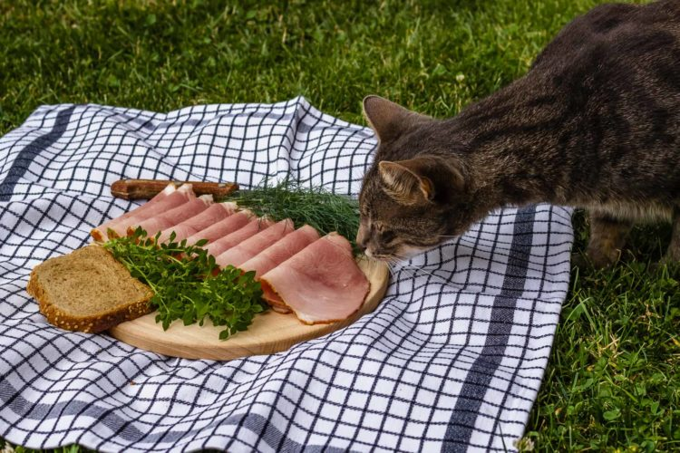 Почему кошкам нельзя есть свинину?