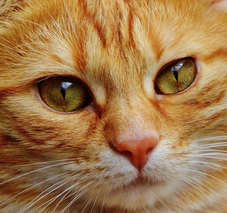 Почему у кошек мокрые носы?