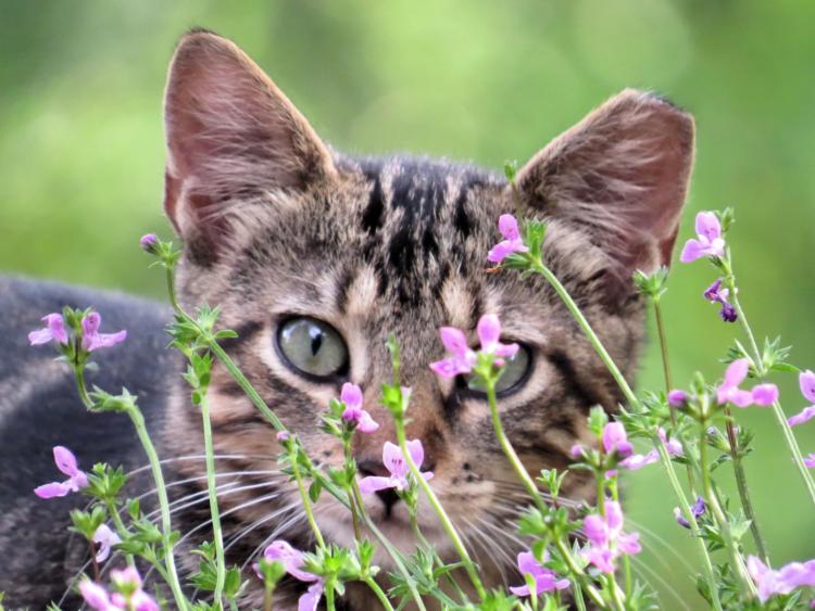 Кошки обладают превосходным зрением