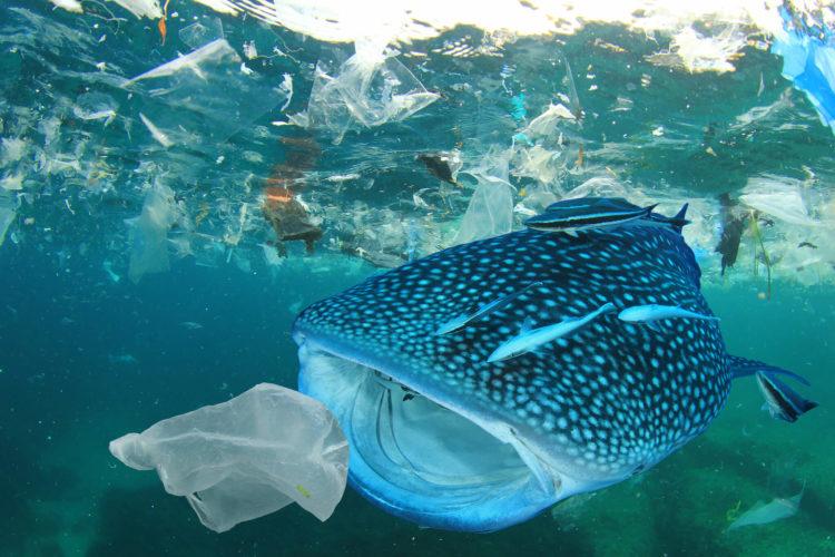Беспокойство касательно частиц пластика в океане
