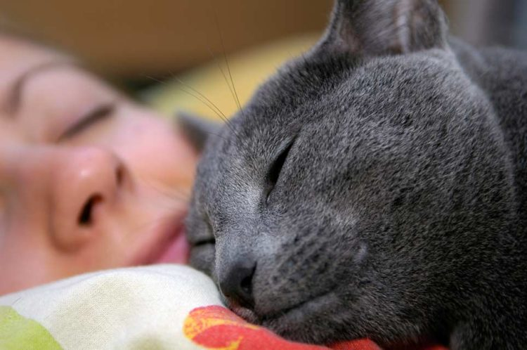Человеческую голову кошка выбирает как самое надежное место в доме
