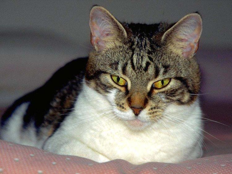 Домашние коты и кошки