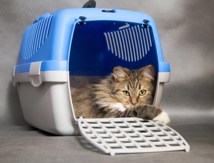 Из клиники кошка приносит на себе смесь неприятных и даже угрожающих «ароматов»