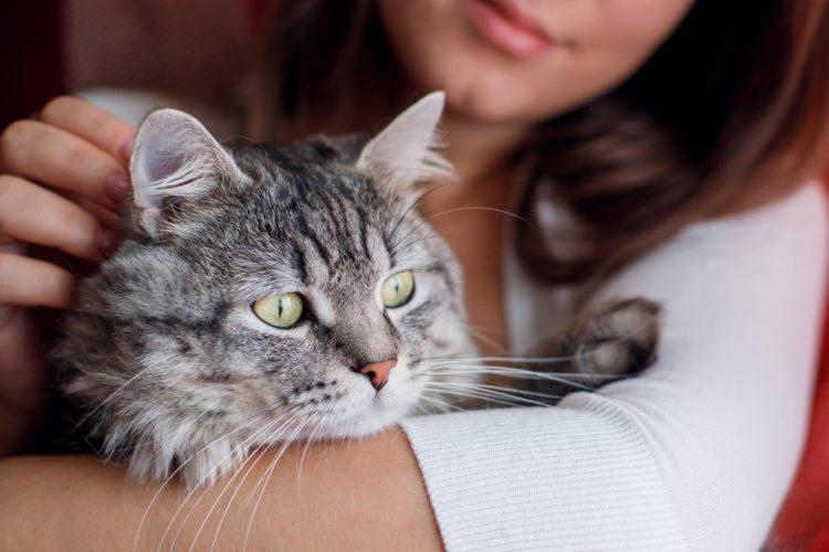 Почему кусается кошка, когда ее гладишь?