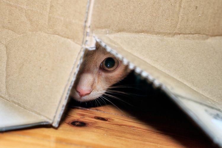 Почему кошка прячется в темных местах?
