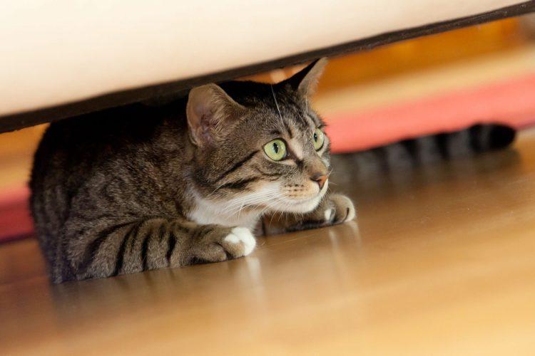 Почему кошки уходят умирать из дома?