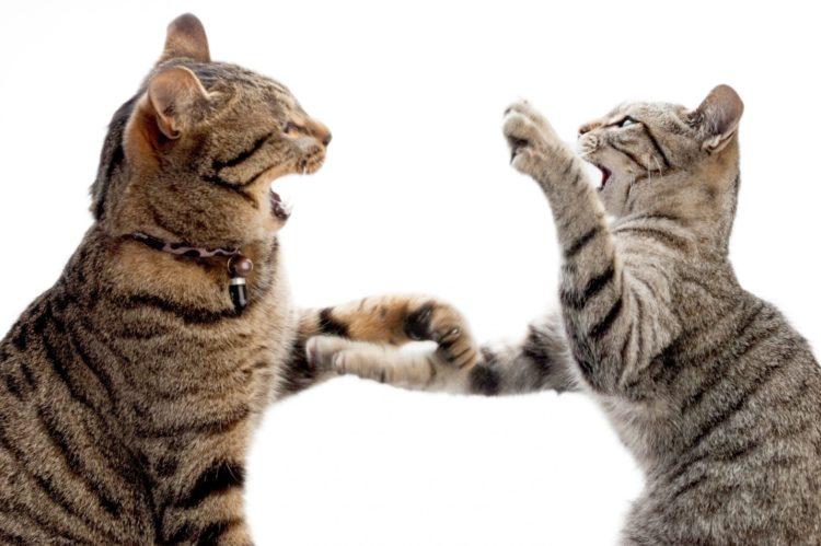 Неожиданное появление постороннего животного в доме может также спровоцировать конфликт между живущими вместе питомцами