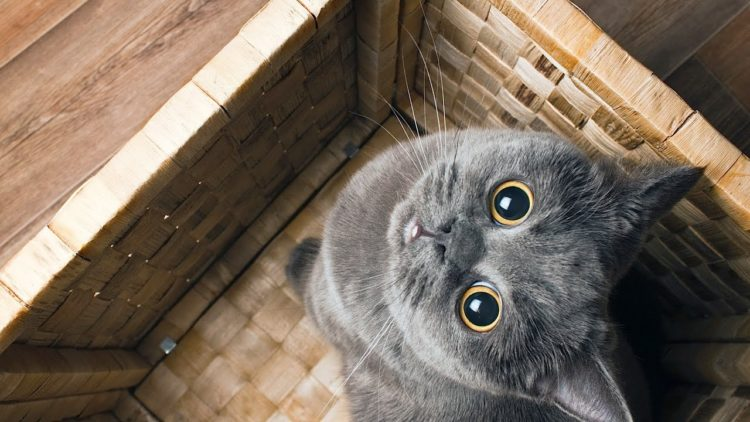 Почему у кошек расширяются зрачки?
