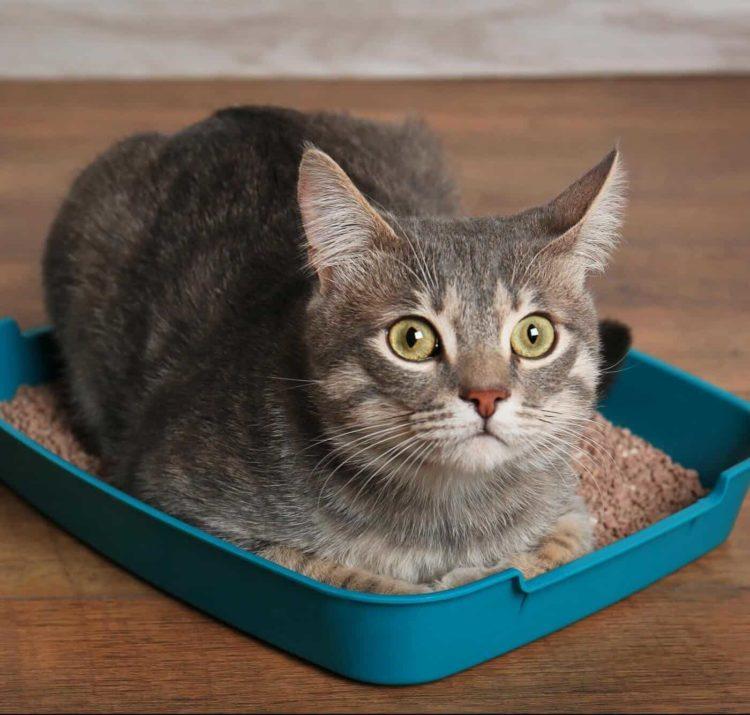 Почему кошка не ходит в лоток?